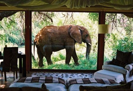 Afrique du Sud : les touristes ont rapporté plus de 300 millions de dollars au seul secteur hôtelier durant le mois de février